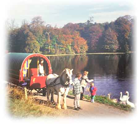 Feed the swans on your Irish horse drawn cravan holiday.
