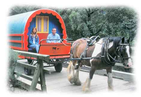 Innovative  Horsedrawn Romany Caravans Along The A65 Near Settle North Yorkshire
